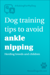 Dog training tips to avoid angle nipping. herding breeds and children