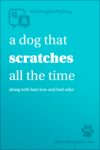 I dog that scratches all the time, along with hair loss and bad odor