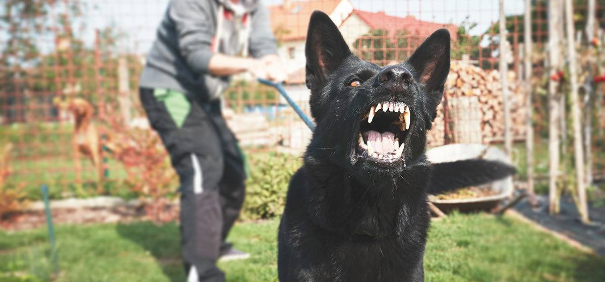 dog barking and lunging