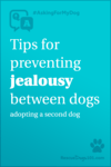 Tips for preventing jealousy between dogs