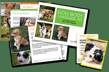 Adoption packet dog body language ebook and flashcards