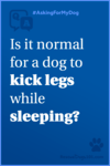 Is it normal for a dog to kick legs while sleeping?