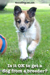 Is it OK to get a dog from a breeder?