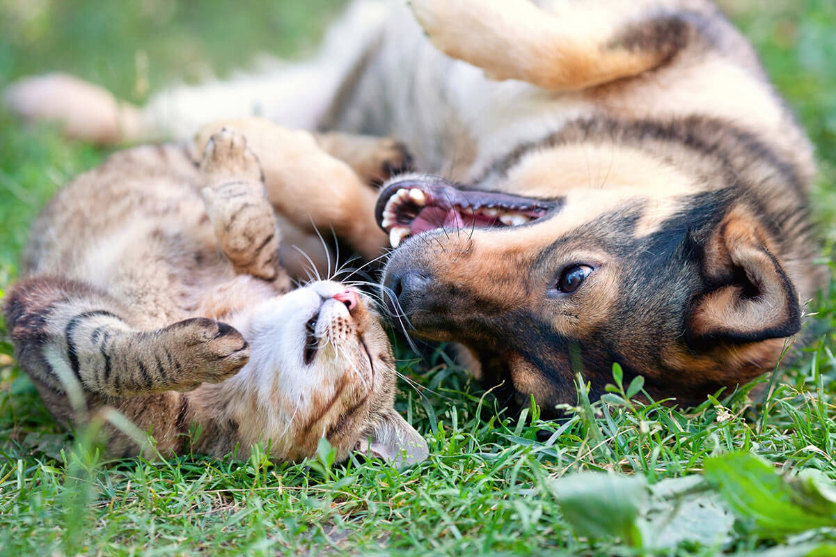 dog and cat are best friends, laying in grass smiling at each other