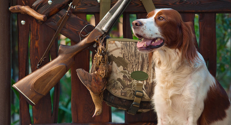 dog with gun and hunting equipment