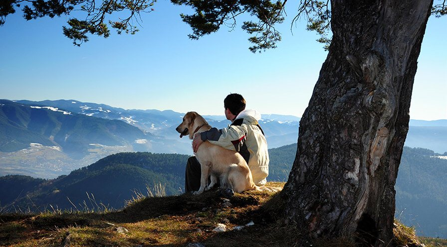 dog sitting with owner on top of mountain