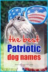 The best Patriotic dog names