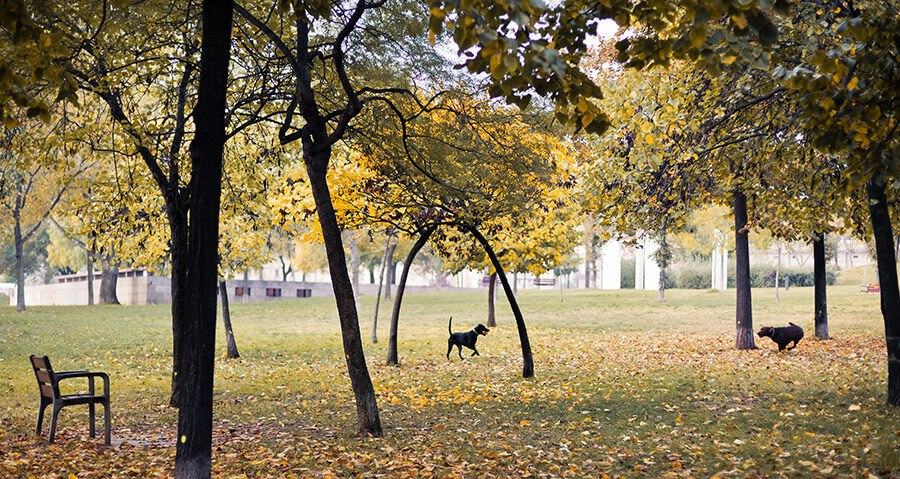 dogs playing in public park in midst of trees
