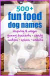 500+ Fun food inspired dog names
