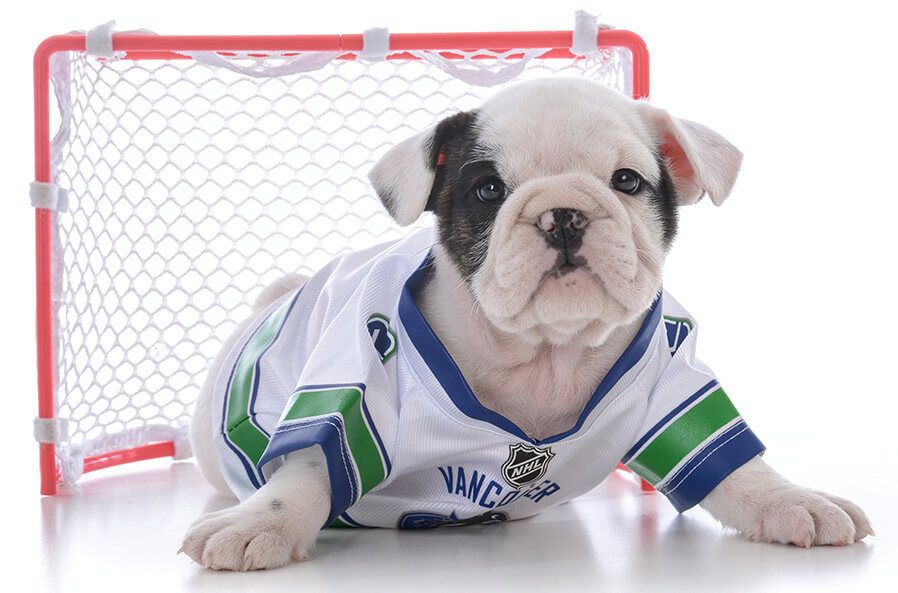 puppy with hockey jersey on and goal