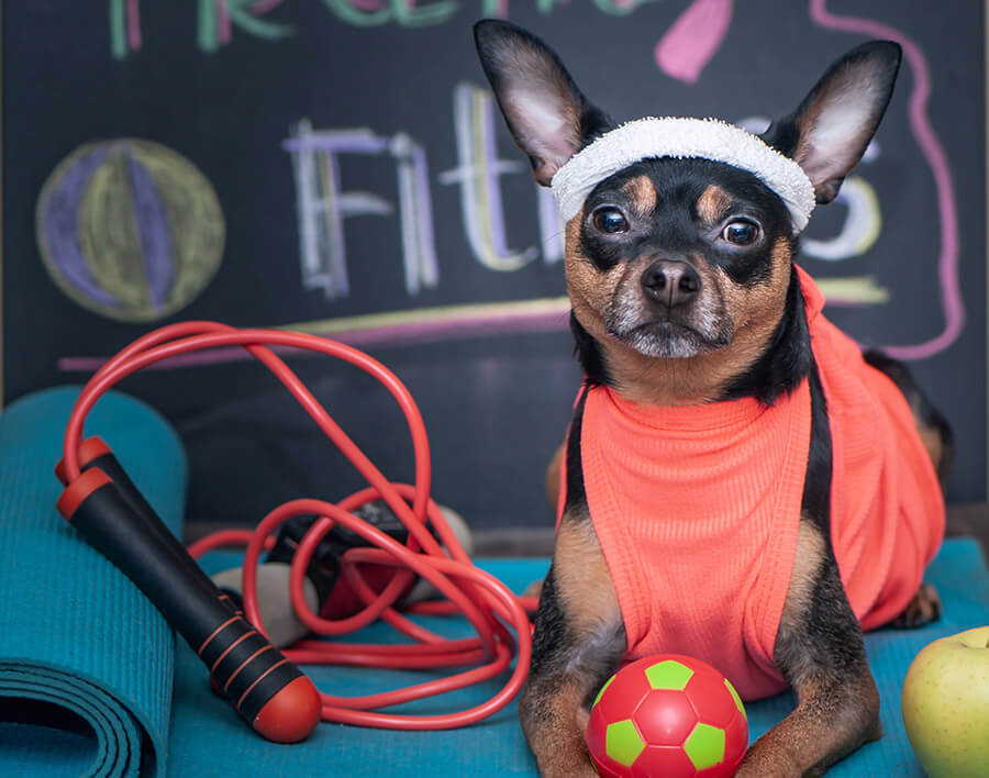 dog dressed in fitness gear