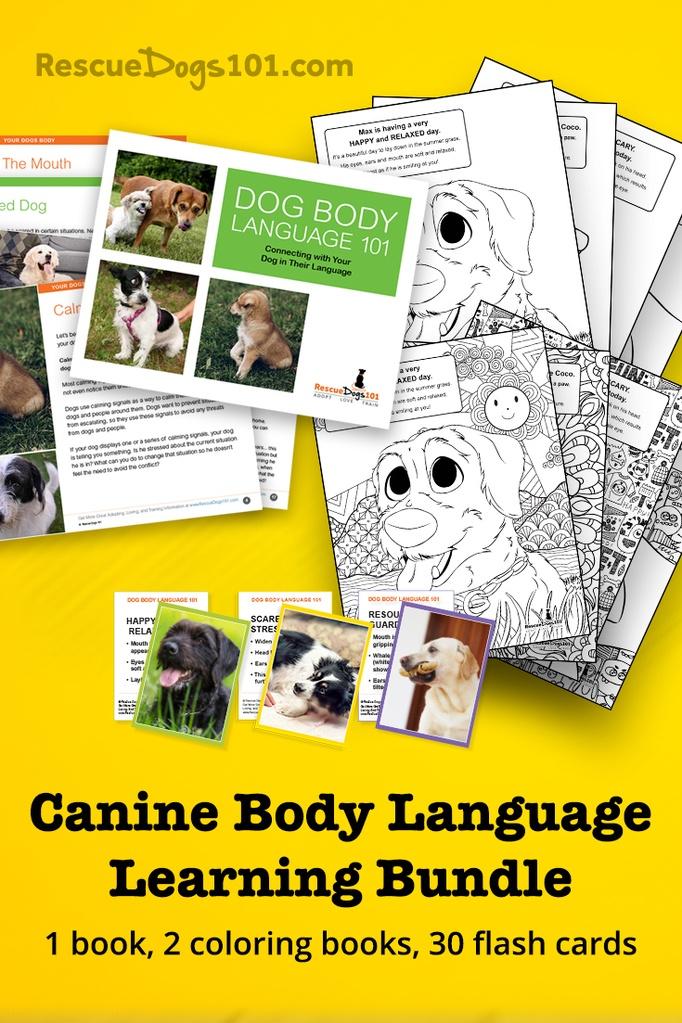 Canine body language learning bundle
