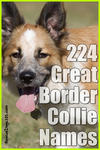 224 great border collie puppy names