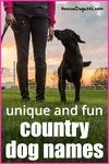 unique and fun country farm dog names