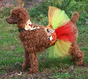 Thanksgiving dog outfit bandana and tutu
