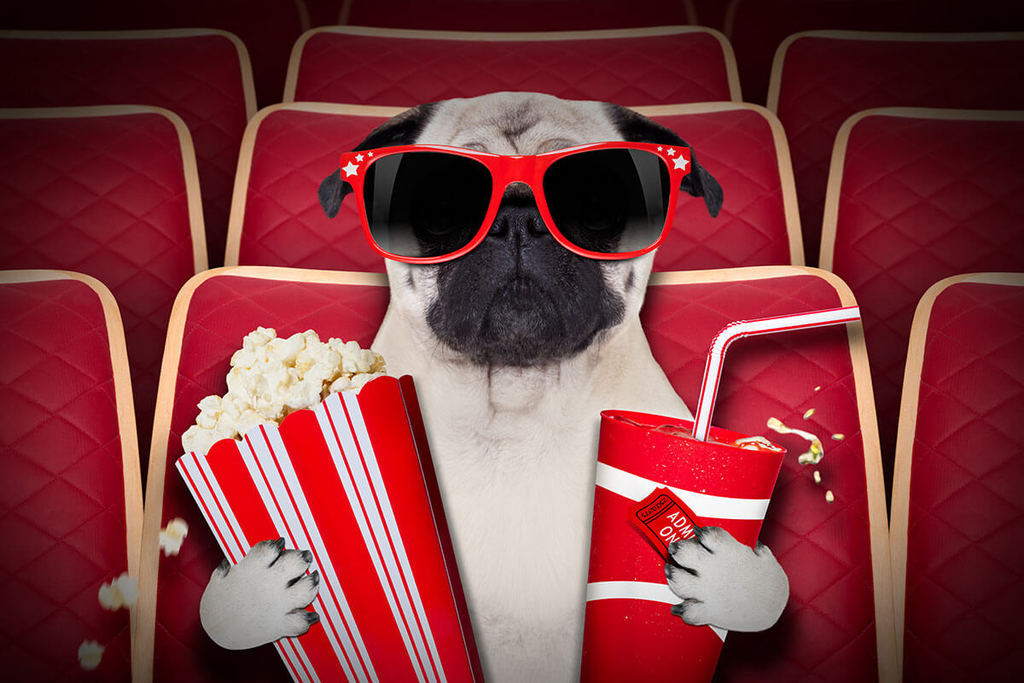 pug dog wearing glasses, watching a movie with popcorn and soda in paws.