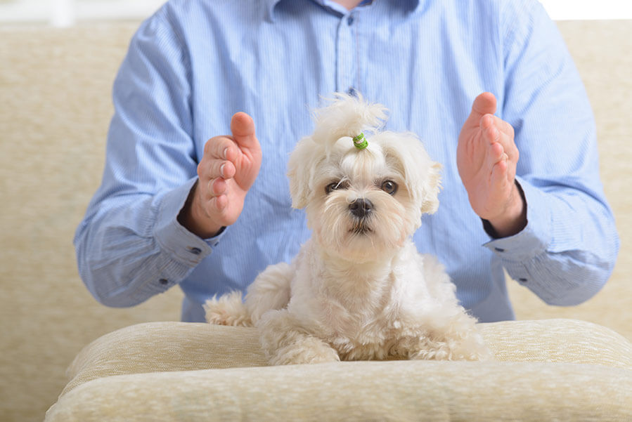 man practicing reiki therapy on a small white dog