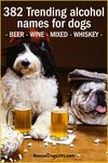 382 Trending alcohol names for dogs