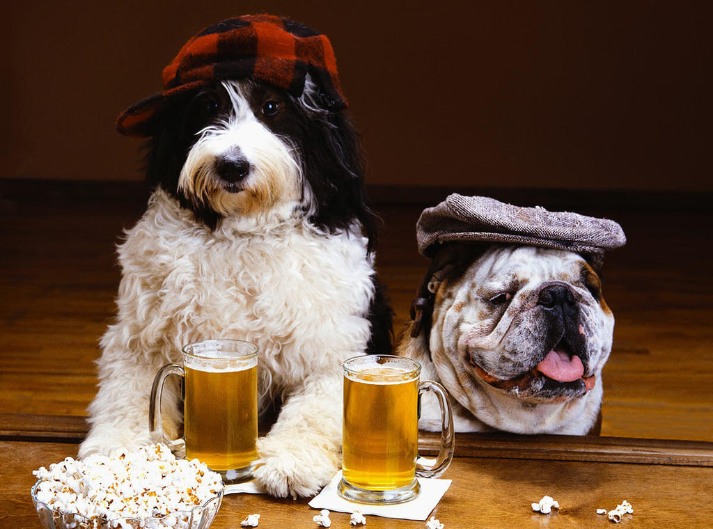two dogs with hats sitting at bar with beer mugs and popcorn