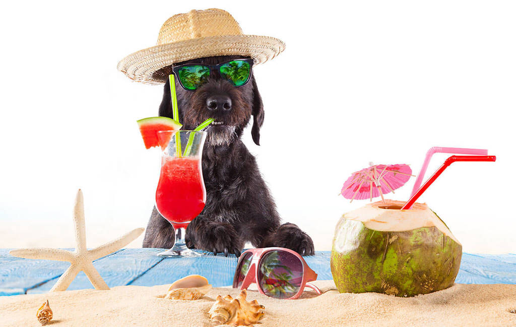 dog with a straw hat, sunglasses, sipping a cocktail drink in a beach scene