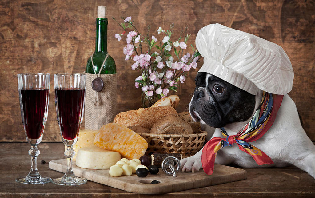french bull dog dressed in a chefs hat and scarf on table with cheese, red wine and bread.