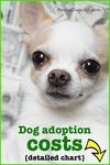 Dog adoption cost (chart)