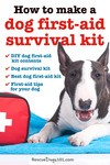How to make a dog first-aid survival kit