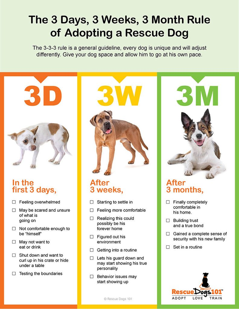 3-3-3 Rule for Rescue Dogs