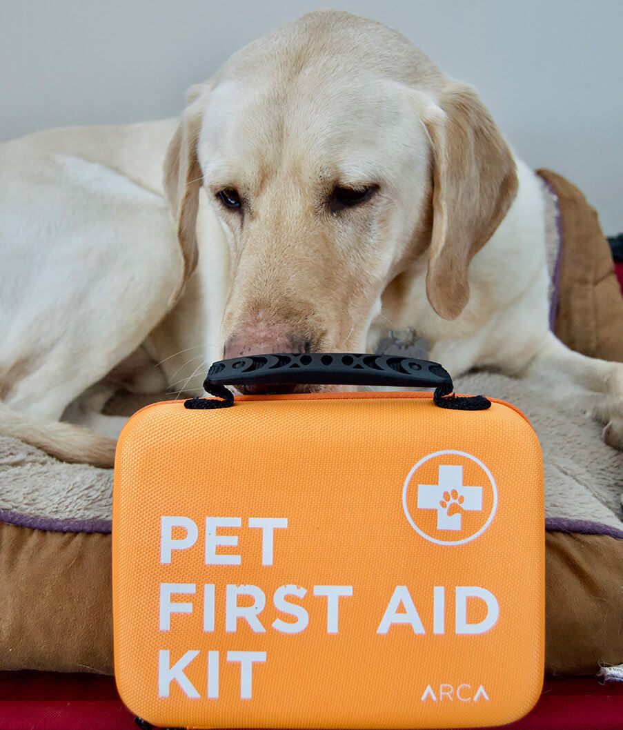Yellow lab sniffing a ARCA PET Cat & Dog First Aid Kit