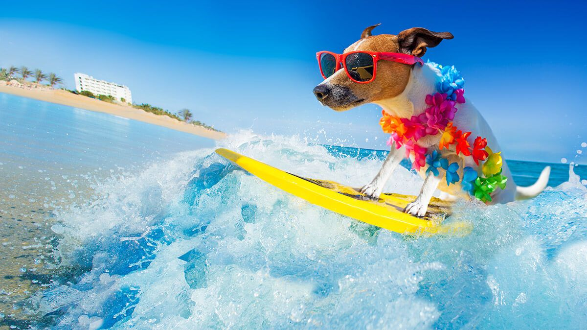 small dog surfing in ocean on beach