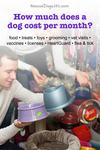 How much do dogs cost per month?