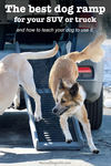 two dogs running down dog car ramp