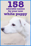 158 adorable names for your new white puppy