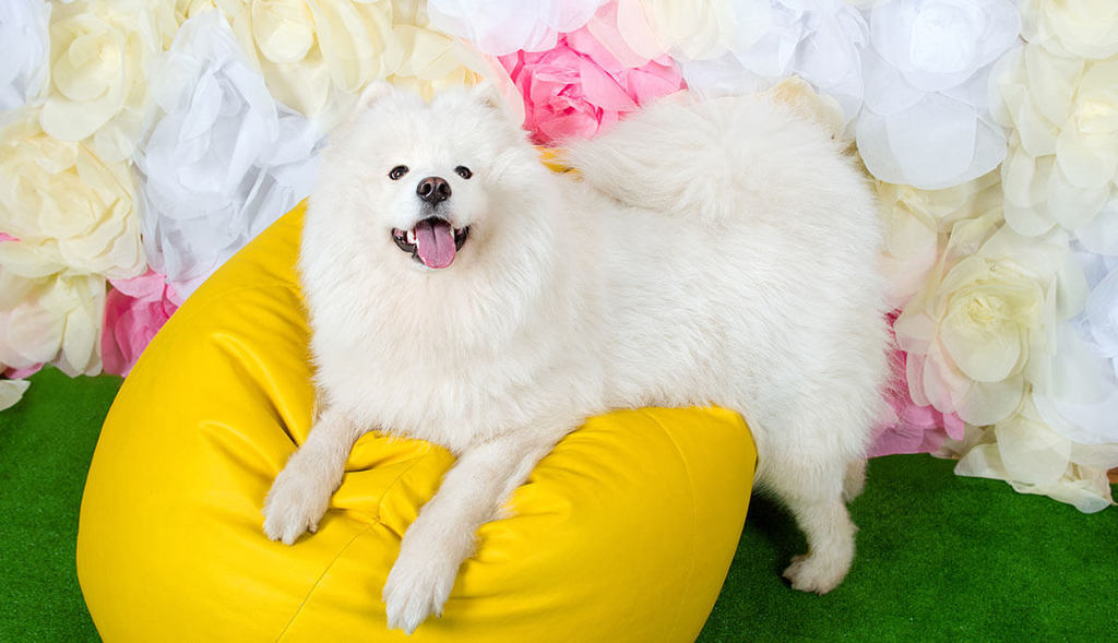 white fluffy dog with flowers in background