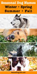 winter, spring, summer and fall dog names