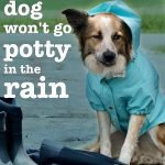 Dog won't pee or poop in rain (Problem Solved!)