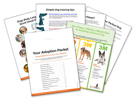 rescue dog adoption booklet packet