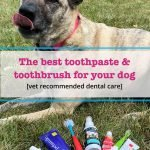 dog looking at toothpaste and toothbrush options