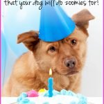 dogs gotcha day with blue party hat and cake